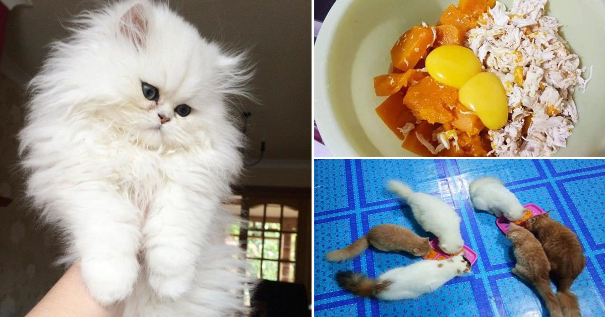 Wanita Ini Kongsi Cara Gemukkan Kucing Guna 3 Bahan Salah Satunya Kuning Telur Vanilla Kismis